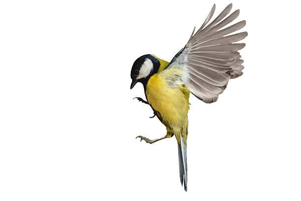 Vogels onder je dakpannen voorkomen