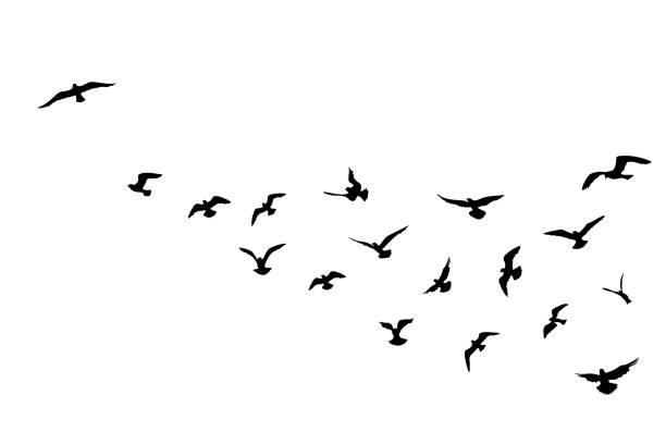 Vogelzwerm